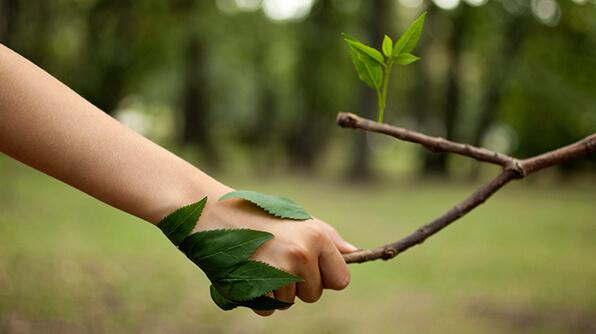 clases de inglés por Skype para ayudar a proteger el medio ambiente